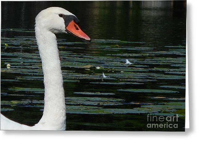 Swan Lake Greeting Card by Tara Lynn