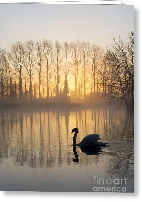 Swan Lake Greeting Card by Tim Gainey