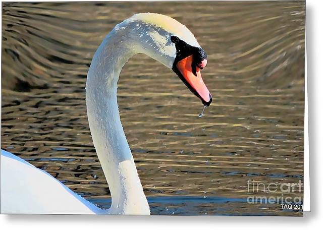 March Greeting Cards - Swan Of A Spring Morn Greeting Card by Tami Quigley