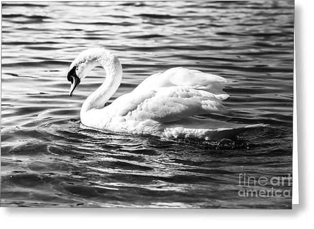 White Pyrography Greeting Cards - Swan Greeting Card by Olga Photography