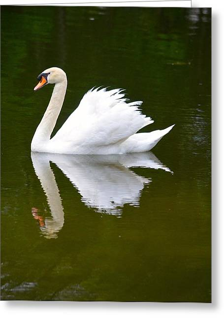 Swans... Greeting Cards - Swan Reflecting Greeting Card by Richard Bryce and Family