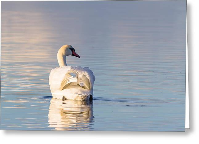 Muted Greeting Cards - Swan4 Greeting Card by Eric Sloan