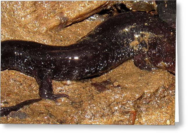Swannanoa Salamander Greeting Card by Joshua Bales