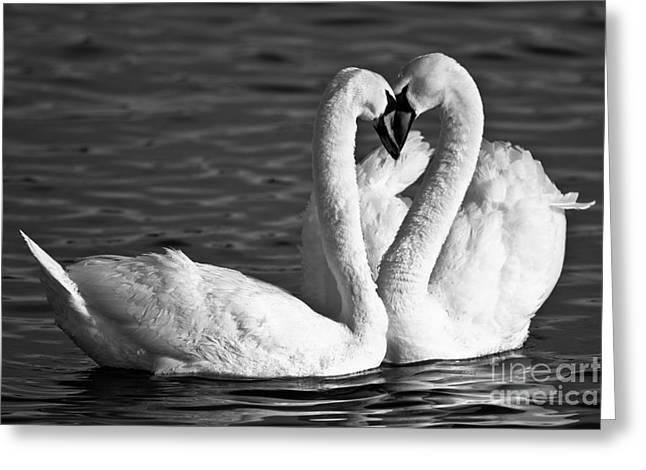Muted Greeting Cards - Swans Greeting Card by Brandon Broderick