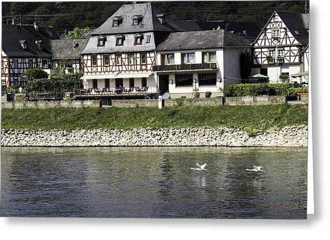 Flying Swan Greeting Cards - Swans on the Rhine in Spay Germany Greeting Card by Teresa Mucha