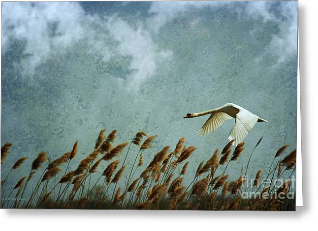 Swans Rule The Marshlands Greeting Card by Beve Brown-Clark Photography