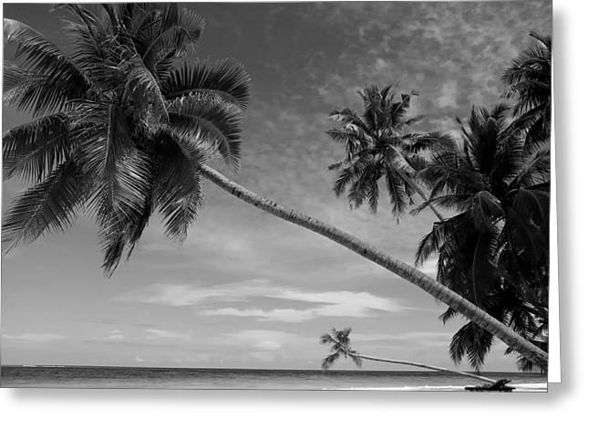 Arabian Sea Greeting Cards - Swaying Palm Trees Greeting Card by Bernie Fant