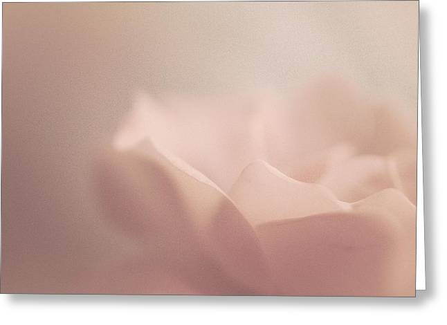 Sweet Angel Rose Greeting Card by The Art Of Marilyn Ridoutt-Greene
