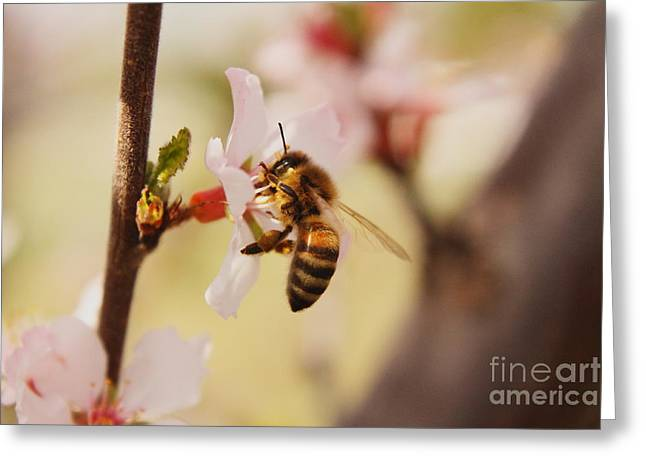 Flying Animal Greeting Cards - Sweet Bee Greeting Card by Melanie Grass