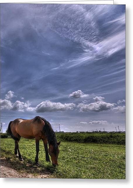 Field. Cloud Greeting Cards - Sweet Country Scents Greeting Card by Evelina Kremsdorf