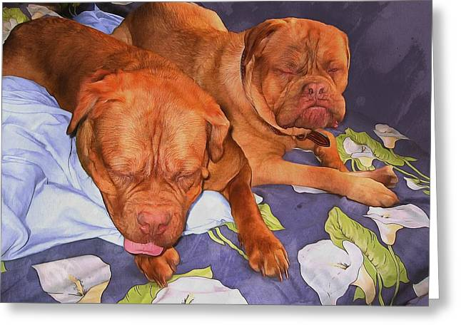 Guard Dog Greeting Cards - Sweet couple Greeting Card by Sergey Lukashin
