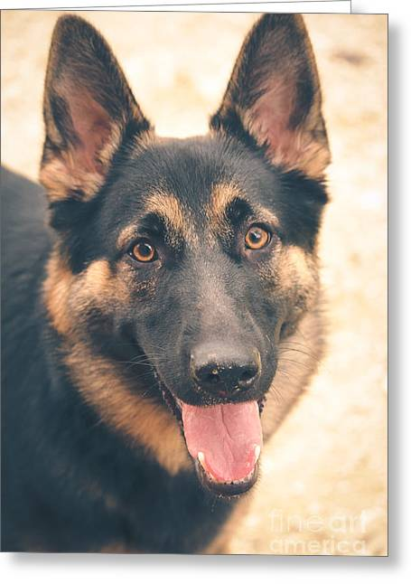 German Shepard Dogs Greeting Cards - Sweet Face Greeting Card by Viviana  Nadowski