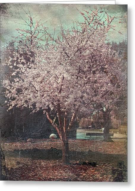 Cherry Blossoms Digital Greeting Cards - Sweet Kisses Under the Tree Greeting Card by Laurie Search