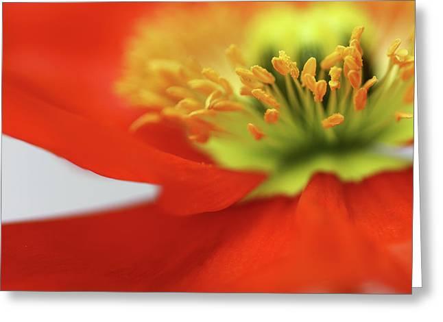 Bob Daalder Greeting Cards - Sweet little Poppy Greeting Card by Bob Daalder