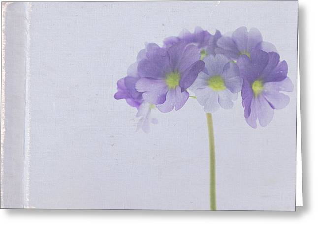 Primroses Photographs Greeting Cards - Sweet Memories Greeting Card by Rebecca Cozart