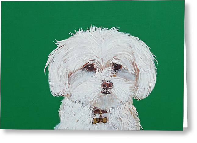 Doggies Greeting Cards - Sweet Pea Maltese Greeting Card by Judy Henn