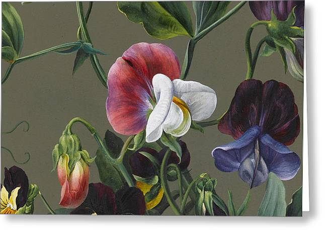 Sweet Peas And Violas Greeting Card by Louise D'Orleans