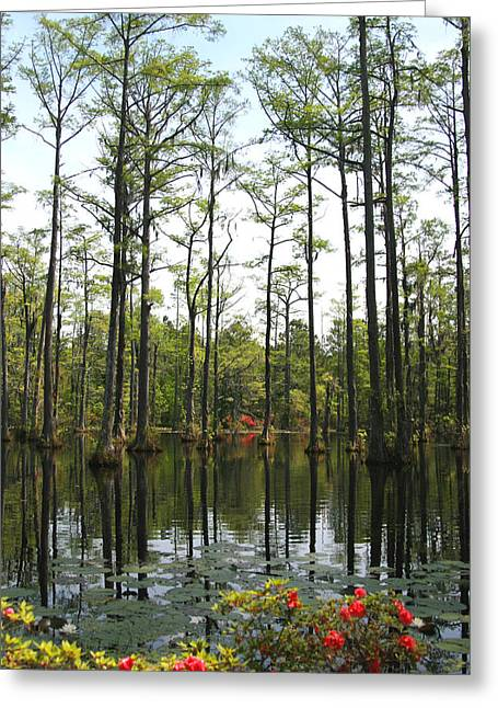Tree Roots Greeting Cards - Sweet Southern Swamps Greeting Card by Marlana Holsten