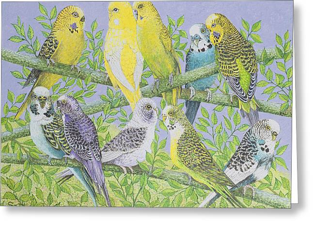 Exotic Drawings Greeting Cards - Sweet Talking Greeting Card by Pat Scott