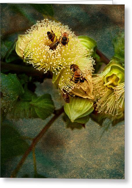 Australian Bees Greeting Cards - Sweet Tastings Greeting Card by Heather Thorning