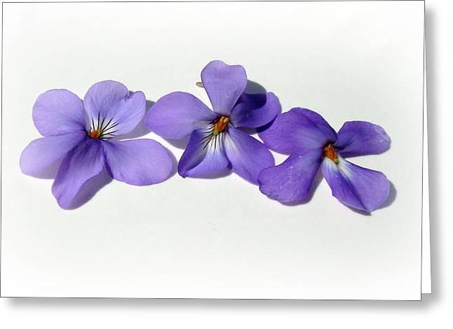 Printed Greeting Cards - Sweet Violet Greeting Card by Kathy Bucari