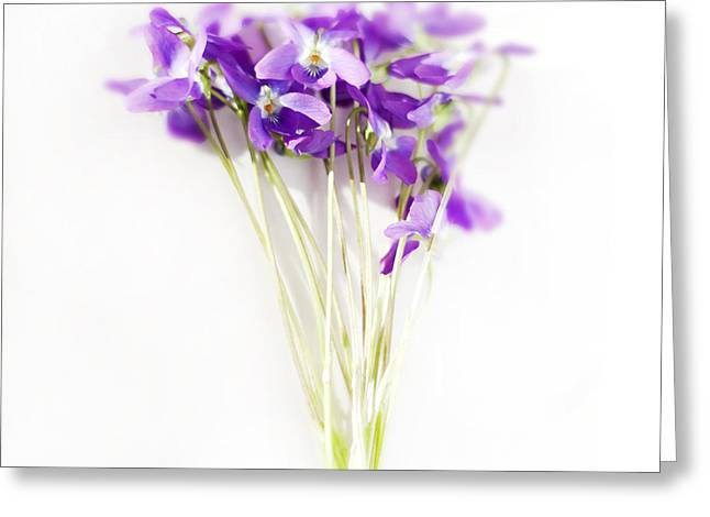 Violet Art Photographs Greeting Cards - Sweet Violets Greeting Card by Linde Townsend