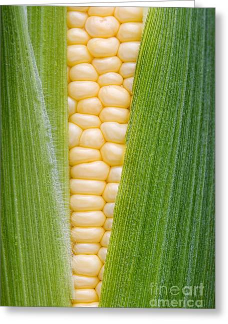 Home Grown Greeting Cards - Sweetcorn Greeting Card by Tim Gainey