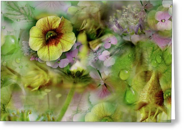 Soft Light Mixed Media Greeting Cards - Sweetness and Light Greeting Card by Bonnie Bruno