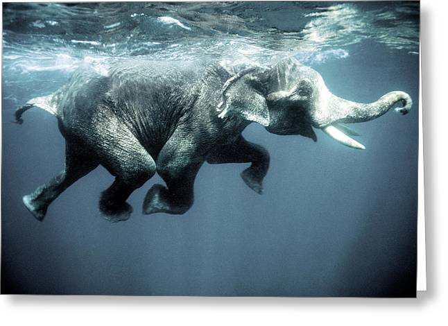 Swimming Elephant Greeting Card by Olivier Blaise