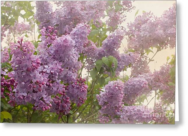 Lilac Greeting Cards - Swimming in a sea of lilacs Greeting Card by Cindy Garber Iverson