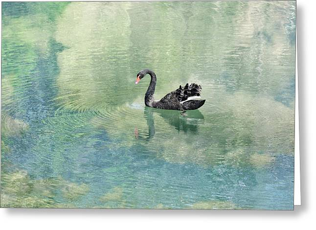 Water Fowl Greeting Cards - Swimming in the Clouds Greeting Card by Edwin A Rivers