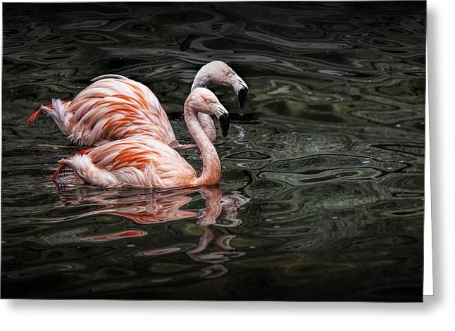 Randy Greeting Cards - Swimming Pink Flamingos Greeting Card by Randall Nyhof