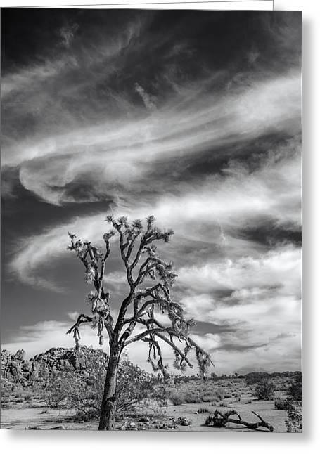 Joshua Tree National Park Greeting Cards - Swirling Clouds in Joshua Tree Greeting Card by Joseph Smith