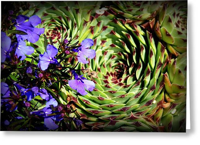 Swirling Vortex Greeting Card by Carla Parris