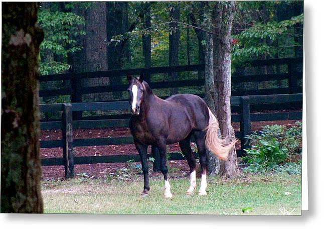 Best Sellers -  - Pastureland Greeting Cards - Swish Of The Tail Greeting Card by Debra     Vatalaro