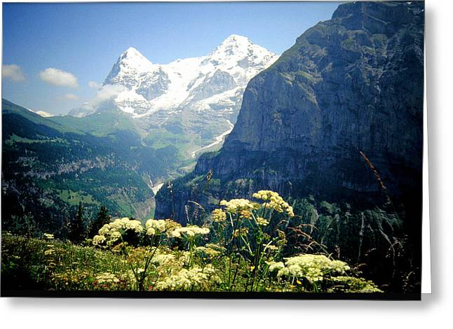 Swiss Photographs Greeting Cards - Swiss Alps and Flowers Greeting Card by William Gardner