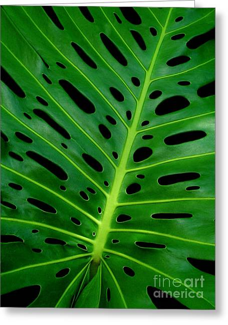 Jim Temple Greeting Cards - Swiss Cheese Plant Greeting Card by James Temple