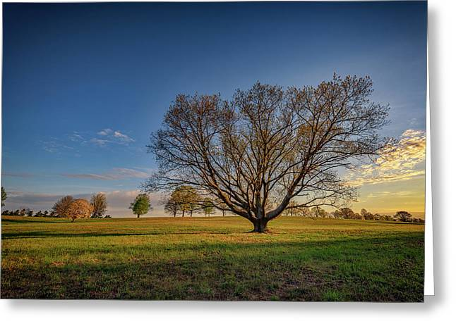 Sycamore In Valley Forge Greeting Card by Rick Berk