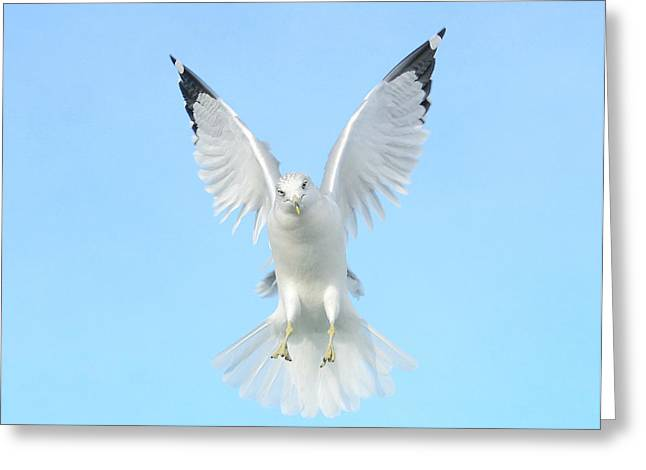 Hovering Greeting Cards - Symmetry Greeting Card by Fraida Gutovich