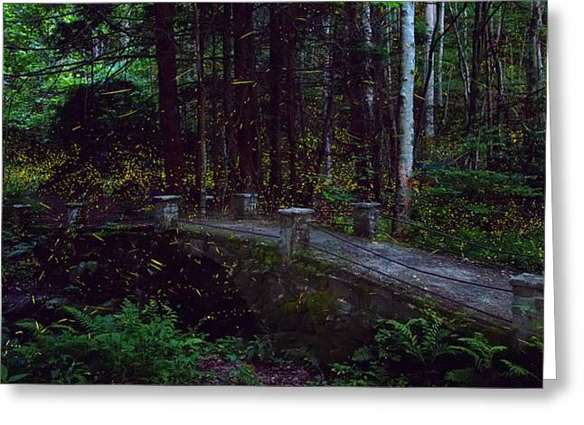 Synchronous Fireflies Greeting Card by Rob Beverly