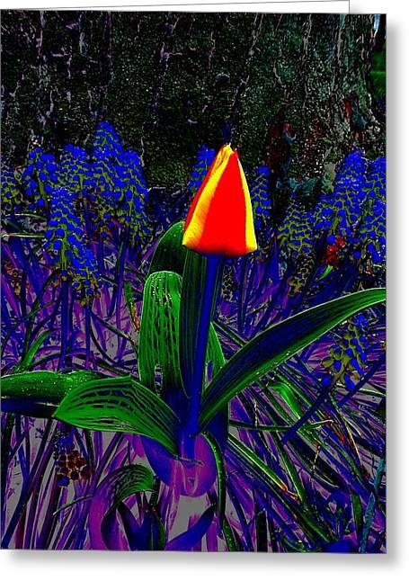 Blue Grapes Photographs Greeting Cards - Ta-Dah Tulip Greeting Card by Beth Akerman