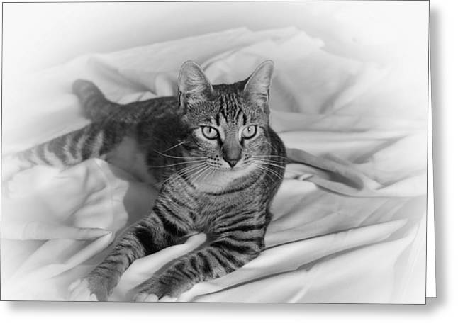 Kitten Prints Greeting Cards - Tabby Cat Greeting Card by Francie Davis