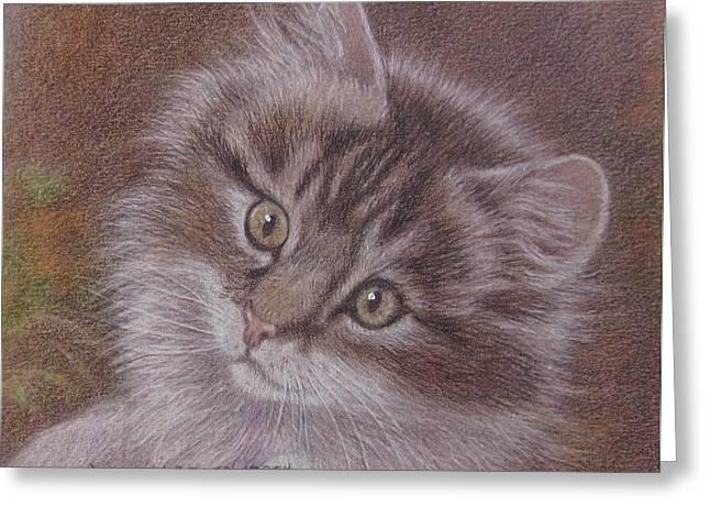 Tabby Kitten Greeting Card by Dorothy Coatsworth