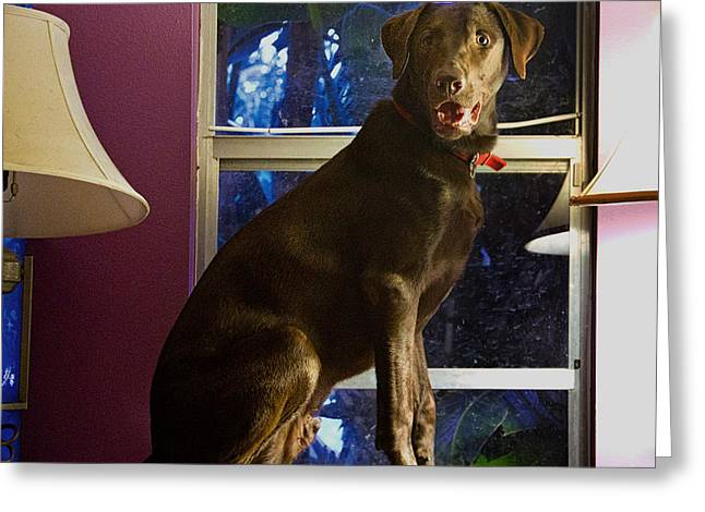 Chocolate Lab Greeting Cards - Table Ornament Greeting Card by Roger Wedegis