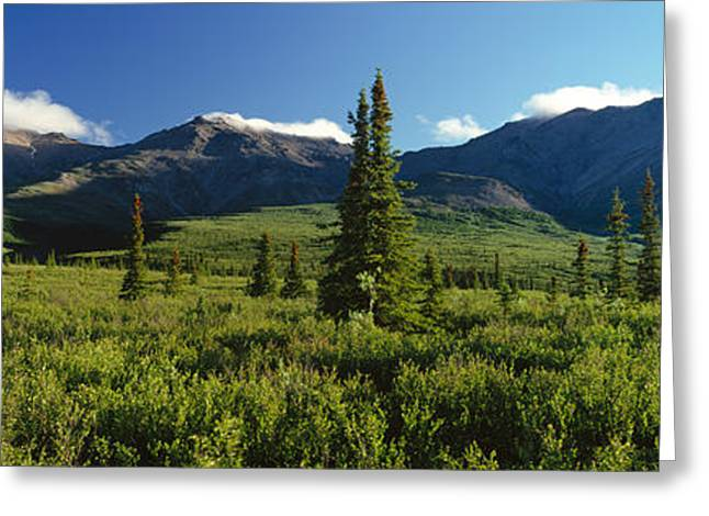 Denali National Park Greeting Cards - Taiga Forest, Denali National Park Greeting Card by Panoramic Images