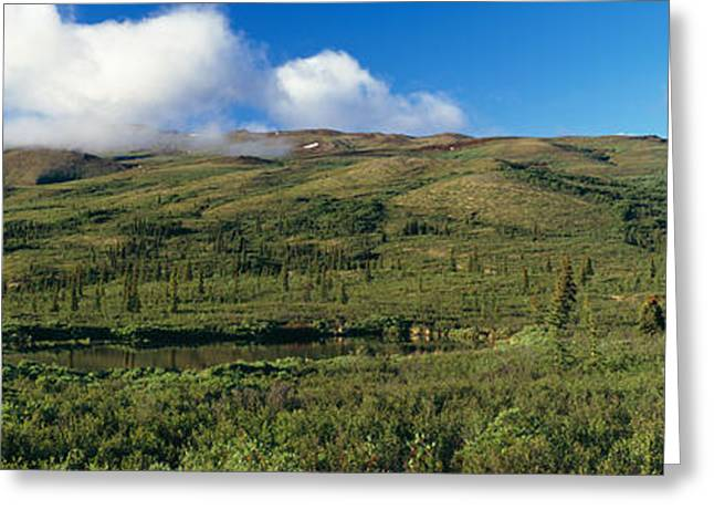Denali National Park Greeting Cards - Taiga Forest In Denali National Park Greeting Card by Panoramic Images
