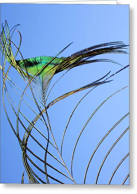 Tail Feather Greeting Cards - Tail Feather Flow Greeting Card by Kristin Elmquist