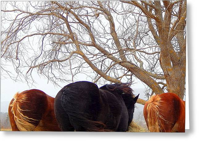 Tail Wind Greeting Card by Karen Cook