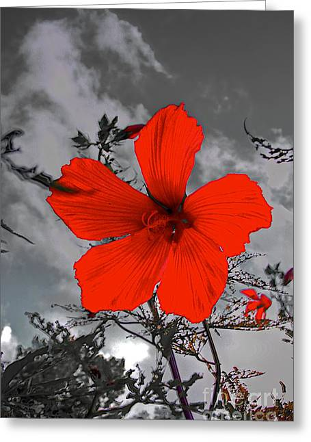 Flower Artwork Greeting Cards - Take a Stand Greeting Card by Robert Pearson