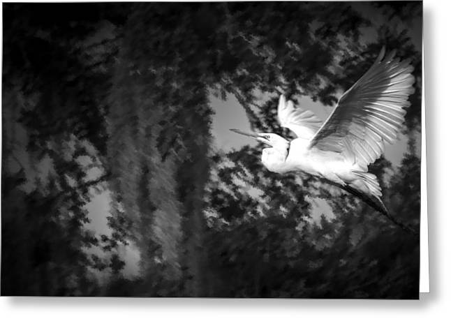Dead Tree Greeting Cards - Take Flight Greeting Card by Marvin Spates